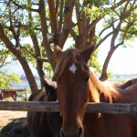 """Why The Long Face"" And Other Things You Don't Say At Oude Molen Eco Village"